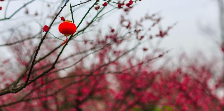 驴妈妈牵手梅花节,再度刷新近10万入园记录,打造春季赏花盛事之最