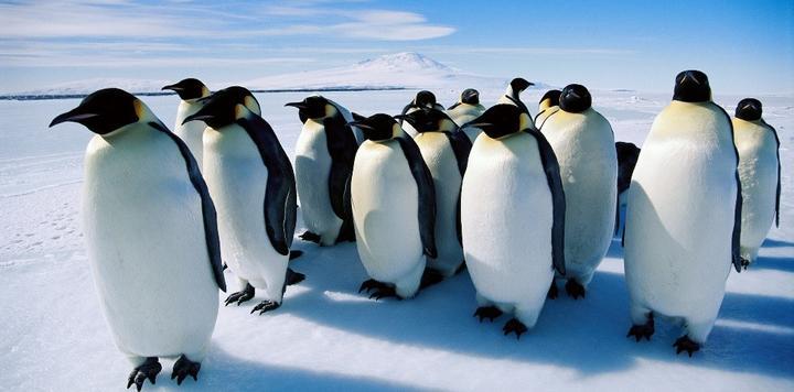 """极地旅游""""冷思考"""":行业热度不断升温,如何破解可持续发展难题?"""