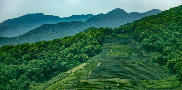 广东清远:投资2.5亿元,建设红茶生态旅游景区