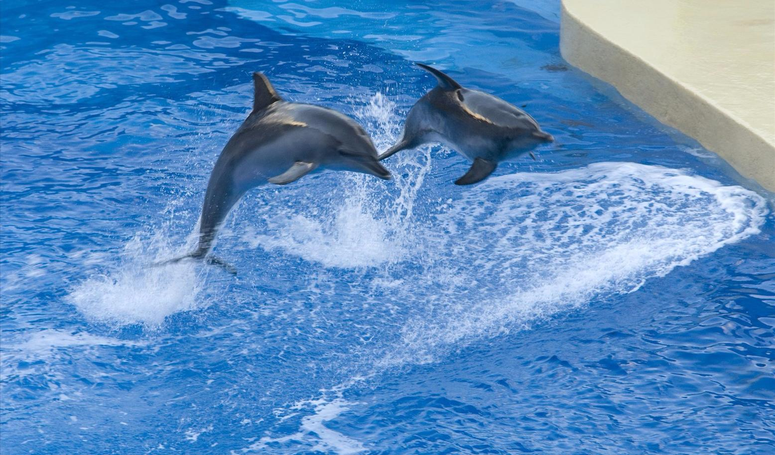 壁纸 动物 海洋动物 鲸鱼 桌面 1556_914