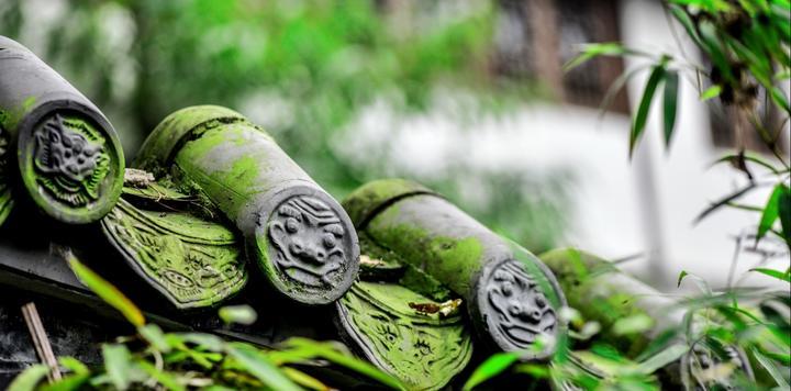总投资11亿元!四川通川签约密林谷乡村旅游项目
