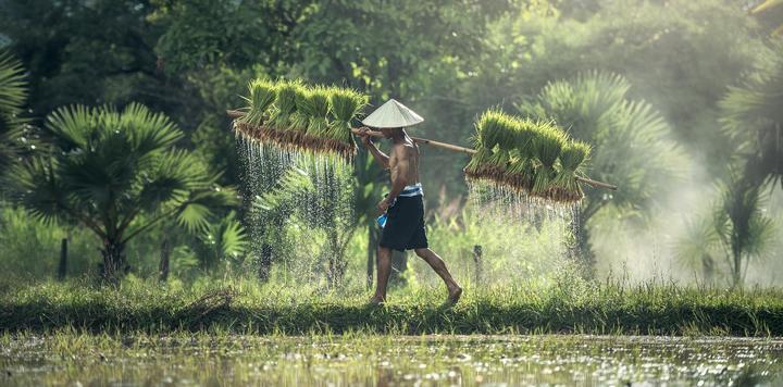 乡村振兴战略细化政策正在酝酿,后期政策望密集落地