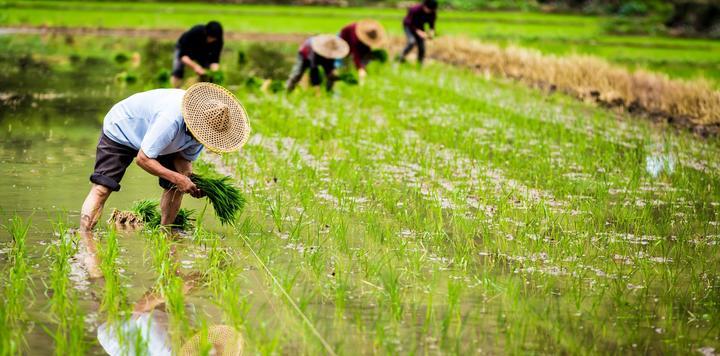 总投资100亿元!恒大高科拟在河北元氏县建现代农业小镇