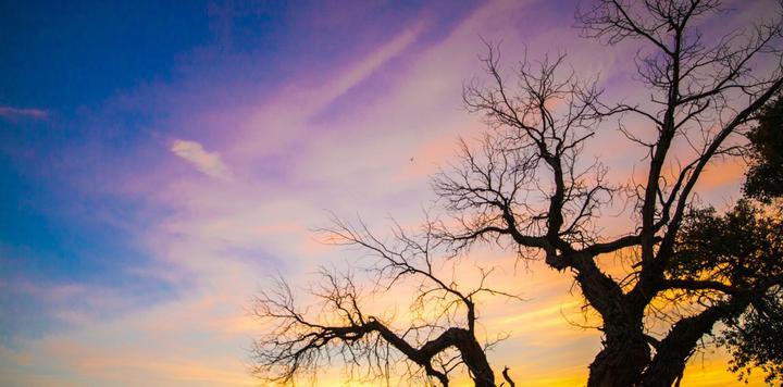 阿拉善种树60余万棵,携程18年来潜心公益