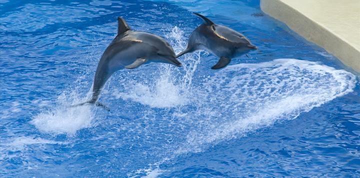 上海海昌海洋公园票价公布:平日票每张330元,高峰票399元