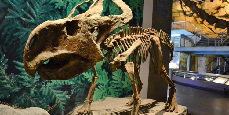 中华恐龙园要上市!这个城市和恐龙没啥关系,但却做出全国最牛的恐龙主题公园