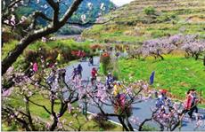 中国八大旅游网络营销案例